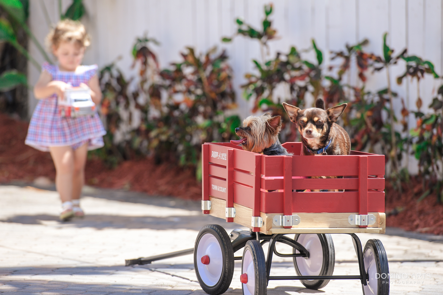 Cute children professional photography with pets in a red wagon