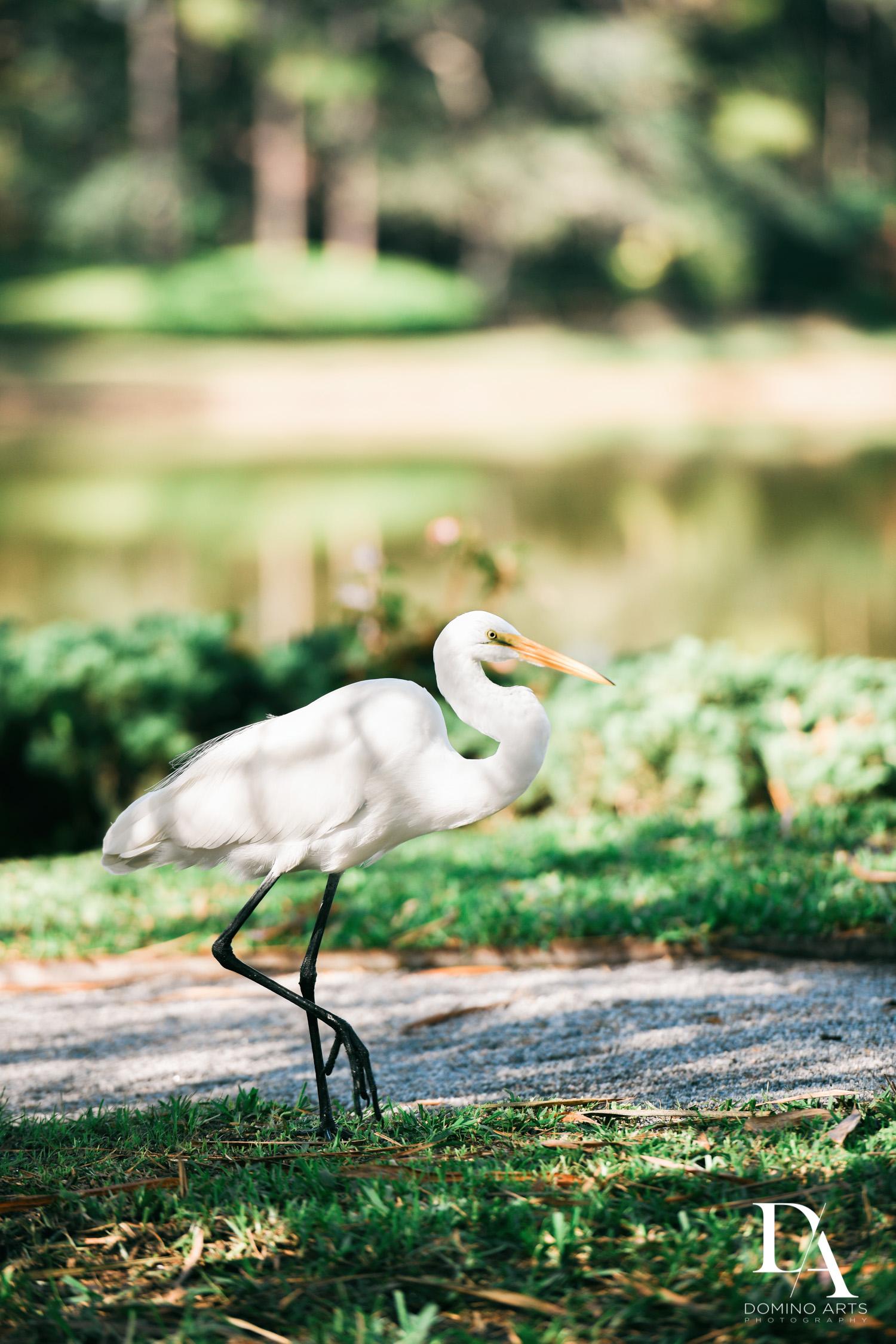 Animals at Japanese Garden Engagement Photography at Morikami by Domino Arts