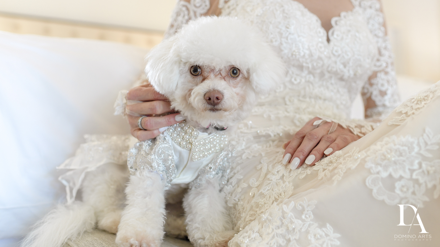 poodle at Classic & Elegant Wedding Photography at Fisher Island Miami by Domino Arts Photography